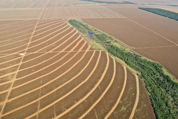 Desmatamento a causa do fogo na Amazonia, dizem cientistas. Floresta nao e pulmao do mundo.