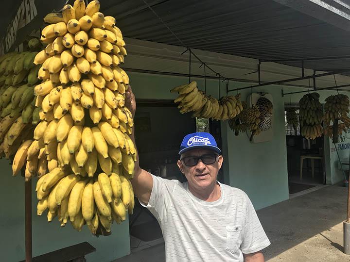 Banana, alimento completo, meio de sobreviencia de pequenos agricultores em Morretes, Brasil