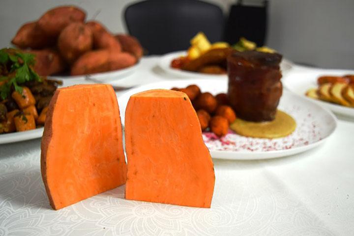 Alaranjada, batata-doce Beauregard, ganha restaurantes do Rio de Janeiro. Foto EMBRAPA Marcos Moulin