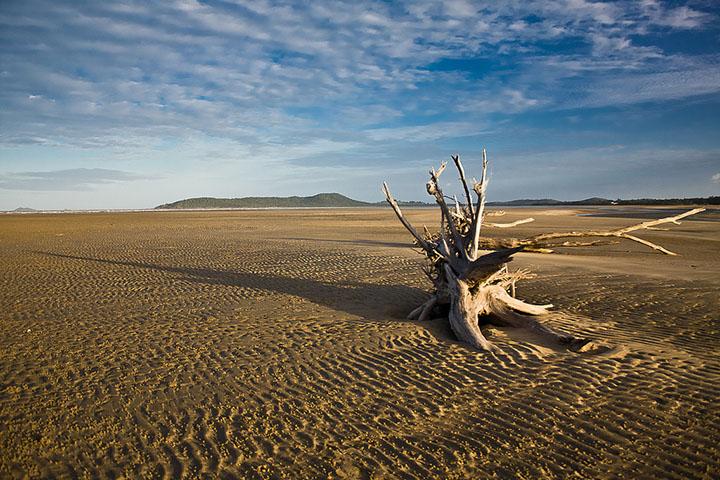 Agricultura extensiva e poucos cuidados, aliados a destruicao de florestas, causas da desertificacao