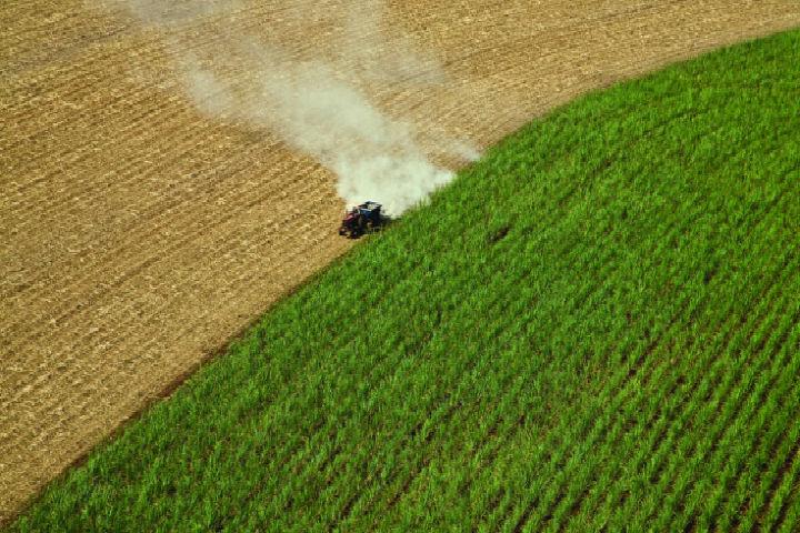 Pesquisa beneficia indústria de bioenergia do Brasil que usa milho e cana-de-açúcar