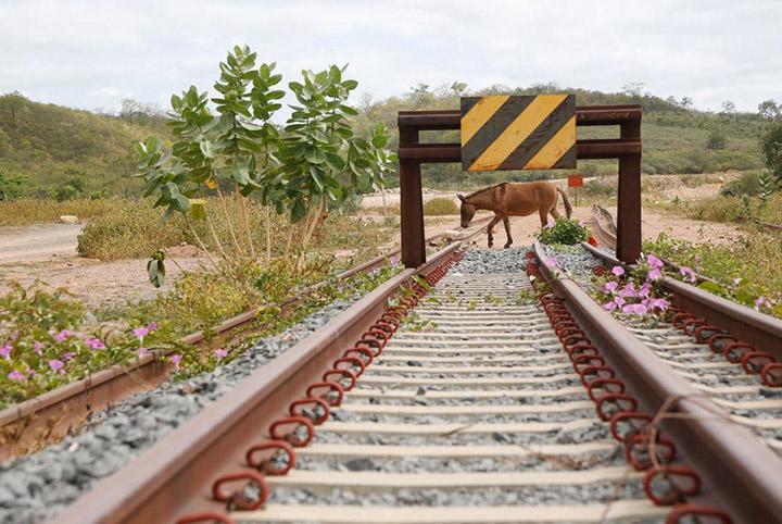 Desperdicio, a ferrovia Transnordestina que ja gastou R$ 6,3 bilhoes. Governo deve retomar obras.