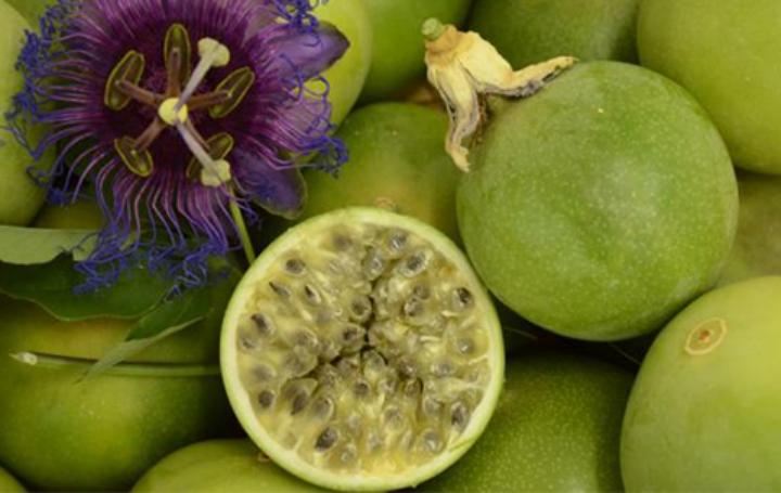 Maracujá da Caatinga foi pesquisado mais de 10 anos e é de tamanho maior e mais rentável